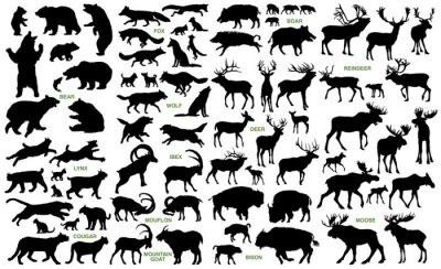 Naklejka Duże ssaki z ziem północnych sylwetki wektora kolekcji