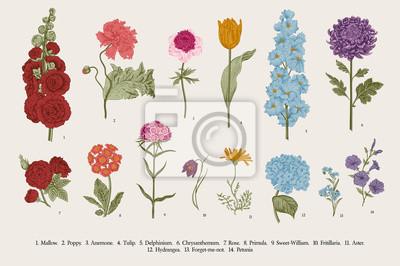 Duży zestaw kwiatów. Wiktoriańskie kwiaty ogrodowe. Klasyczna botaniczna rocznika ilustracja.