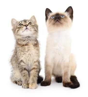 Naklejka Dwa małe kocięta