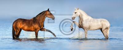 Naklejka Dwa piękne konie stojących w niebieskiej wodzie. Panorama witryny