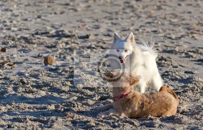 dwa psy gry
