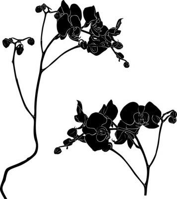 Naklejka dwie gałęzie orchidei szkice na białym