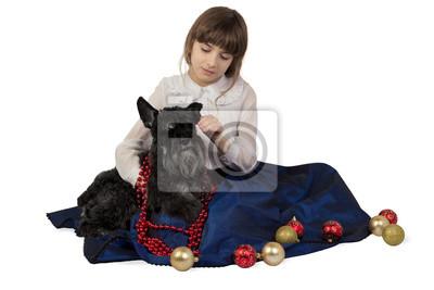 Dziewczyna oddanie dekoracje świąteczne na psa, Sznaucer miniaturowy. Pojedynczo na białym tle.