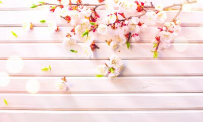 Easter Spring Blossom on white wooden plank background. Easter Apricot flowers on wood border art design. Pink blooming tree on wood