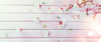 Easter Spring Blossom on white wooden plank background. Easter Apricot flowers on wood, border art design. Pink blooming tree on wood backdrop closeup.