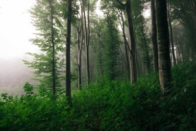 edge of forest with green foliage, lush vegetation woods landscape