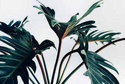 Naklejka Egzotyczne tropikalny xanadu pozostawia na białym background.nature koncepcje