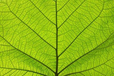 Naklejka Ekstremum zamknięta up tekstura zielone liść żyły