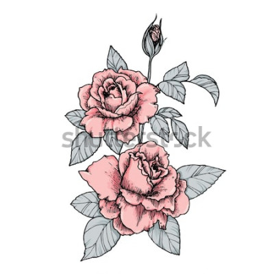 Naklejka Elegancka winieta z różowymi różami. Ręcznie rysowane na białym tle ilustracji wektorowych w stylu vintage