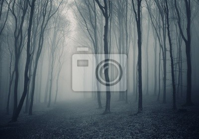 elegancki las z mgły