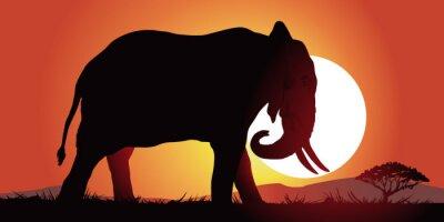 Naklejka Elephant-couche de soleil