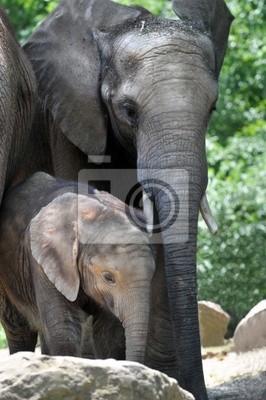 Elephant matka z cielęcia