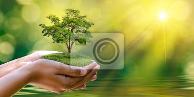 Naklejka environment Earth Day W rękach drzew rosnących sadzonek. Bokeh zielonym tle Kobieta strony gospodarstwa drzewa na trawie dziedzinie przyrody Koncepcja ochrony lasów