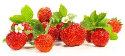 Naklejka Erdbeeren - Panorama