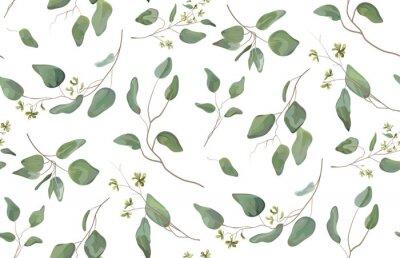 Naklejka Eukaliptus różny drzewo, ulistnienie naturalne gałąź z zielonymi liśćmi sia tropikalnego bezszwowego wzór, akwarela styl. Wektorowa dekoracyjna piękna śliczna elegancka ilustracja odizolowywał białego
