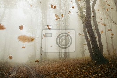 falling leaves blowing in the wind in autumn forest landscape