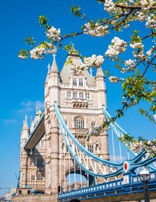 Naklejka Famous landmark of London Tower Bridge in spring season with white apple tree flowers in composition - England, United Kingdom