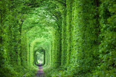 Naklejka Fantastyczna nieruchomości Tunnel of Love, zielonych drzew i kolej