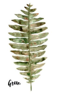 Naklejka Fern. Watercolor illustration isolated on white backgrounde..Floral botanical clip art for design or print