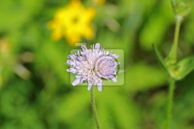 Fioletowy kwiat na zielonej łące latem