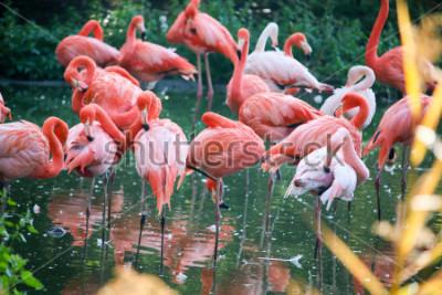 Naklejka flamingo on the pond