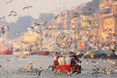 Naklejka Flock of seagull at Vanarasi