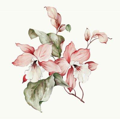 Naklejka Flowers watercolor illustration.Manual composition.Big Set watercolor elements.