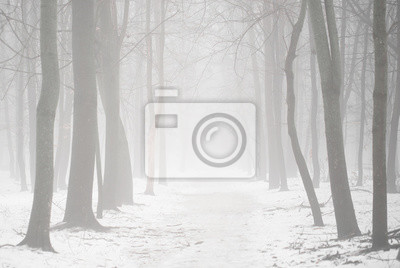 Fog in the woodland or forest with oak trees covered in mist