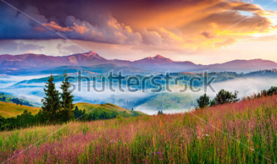 Naklejka Foggy summer sunrise in the Carpathian mountains. Colorful morning scene in the mountain valley. Beauty of nature concept background. Artistic style post processed photo.