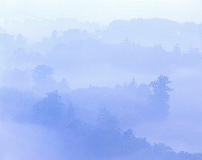 Naklejka forest landscape, cedars, fog, forest, landscape, trees, nature, plants, cedar forest, coniferous forest, coniferous trees, haze, foggy, blue,