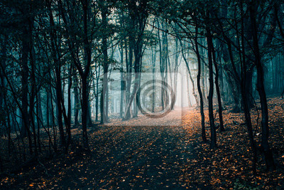 forest path with colorful autumn leaves on the ground, mysterious landscape