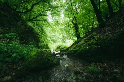 forest stream with fresh water, spring in lush green forest nature landscape