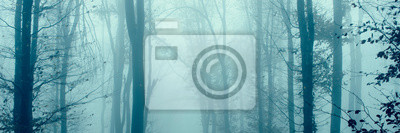 forest trees in fog panorama landscape