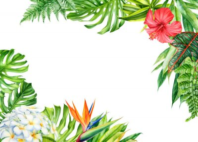 Naklejka frame, tropical leaves and flowers on an isolated background, greeting cards with space for text, watercolor painting,  floral design, plumeria, strelitzia, palms, monstera, ficus
