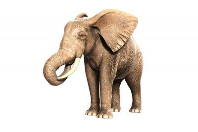 Naklejka Freigestellter słoń na jedzeniu (wyrenderowany obraz)