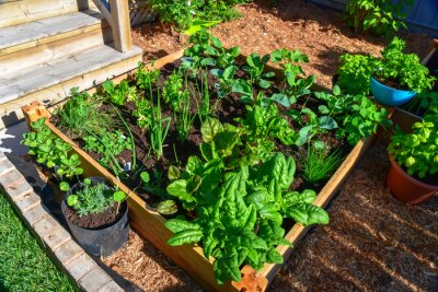 Naklejka Fresh food from your own garden is part of a healthy lifestyle. Planted in spring, this raised backyard garden bed is loaded with a variety of herbs and vegetables ready to be harvested in summer.