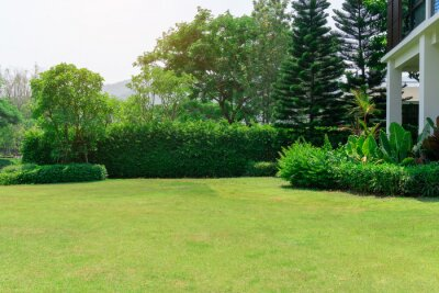 Naklejka Fresh green grass smooth lawn as a carpet with curve form of bush, trees on the background, good maintenance lanscapes in a garden under cloudy sky and morning sunlight