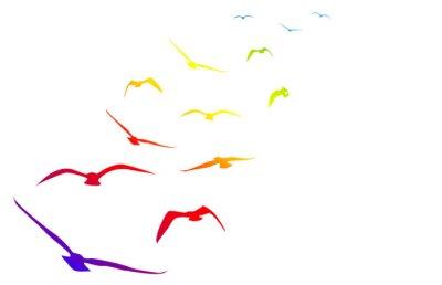 Naklejka gabbiani, Volare, volo, Arcobaleno, tempo