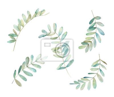 Gałąź akwarela eukaliptusowa. Zestaw zieleni botanicznej. Pojedyncze obrazy na białym tle. Druk artystyczny
