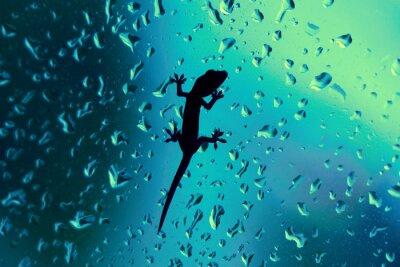 Naklejka Gecko On Glass Window Wet With Rain Drops