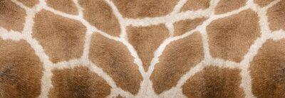 Naklejka Giraffe skin Texture - Image 1
