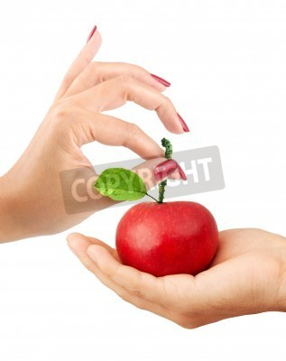 Naklejka Girl gives the man an apple isolated on a white background