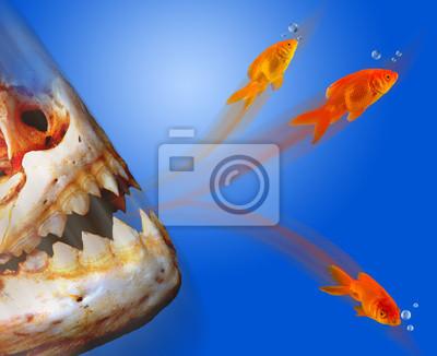 Goldfish ucieczki z Monster.