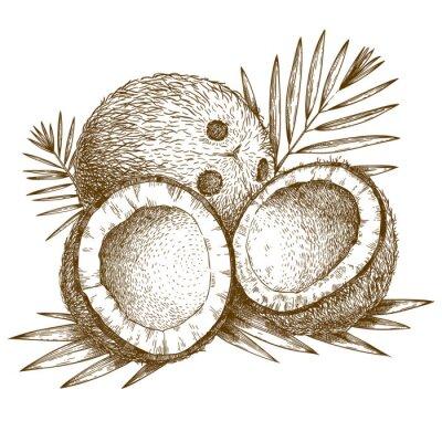 Naklejka grawerowanie ilustracji kokosowego i liści palmowych