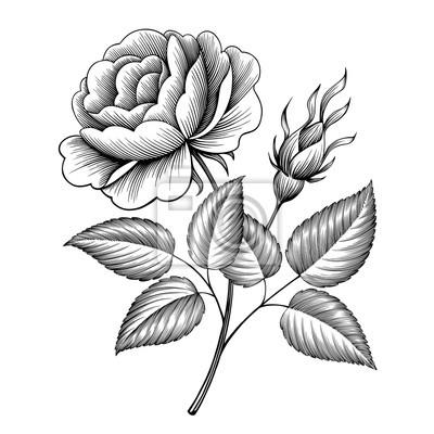 grawerowanie rocznika kwiat róży tatuaż stylu wiktoriańskim kaligraficzne botaniczny ilustracji wektorowych
