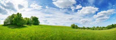 Naklejka Green field with white and yellow dandelions outdoors in nature in summer