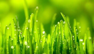 Naklejka Green Grass