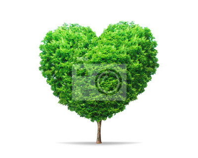 Naklejka Green leaf tree in heart shape with nature isolated on pure white background. Environment tree for decoration creative concept.