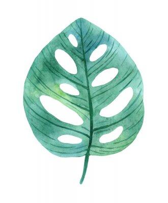 Naklejka Green leaves of monstera from humid rainforest.