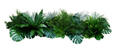 Naklejka Green leaves of tropical plants bush (Monstera, palm, rubber plant, pine, bird's nest fern) floral arrangement indoors garden nature backdrop isolated on white background, clipping path included.